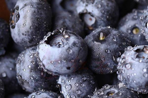 如何选择蓝莓?只需采摘优质蓝莓