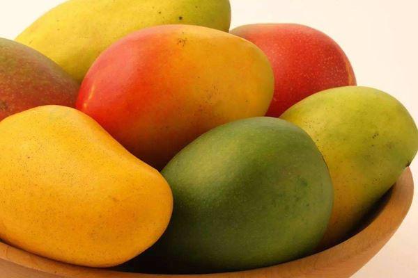 芒果越大越好?太大不甜