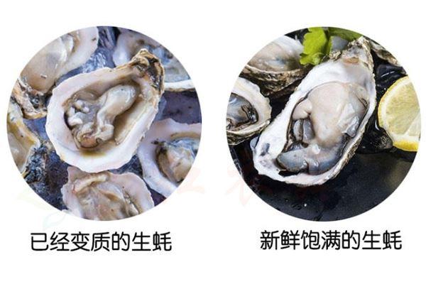 如何区分牡蛎肉的变质和新鲜